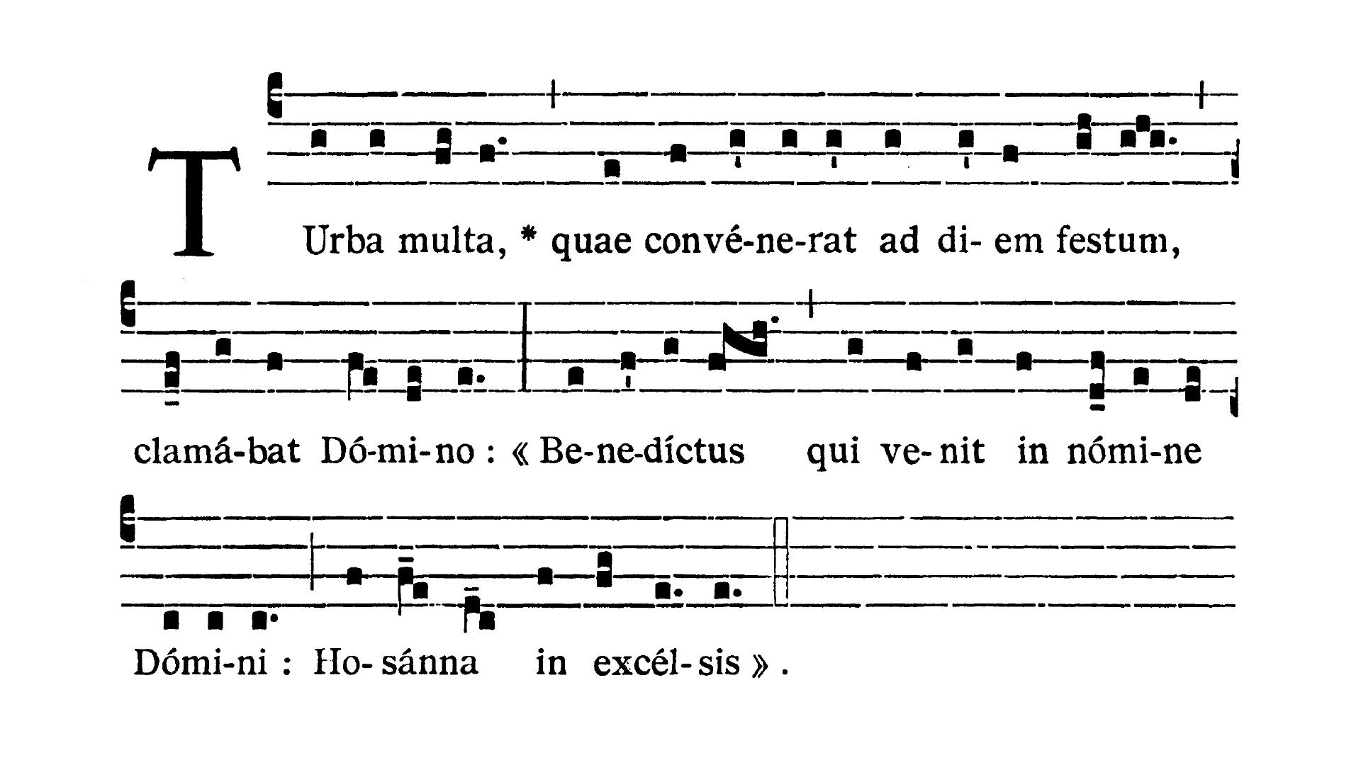 Dominica II in Passionis seu in Palmis (II Niedziela Męki Pańskiej lub Palmowa) - Antiphona (Turba multa)